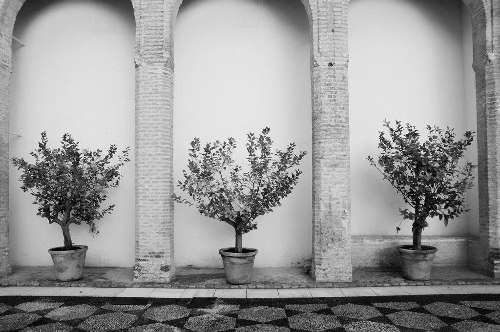 Three orange trees  by brigette