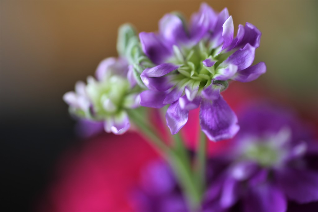Purple by phil_sandford
