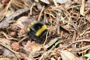 5th Jul 2019 - Busy Bee