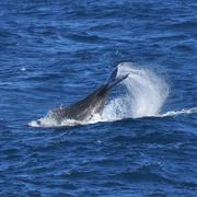 4th Jul 2019 - Whale Tail