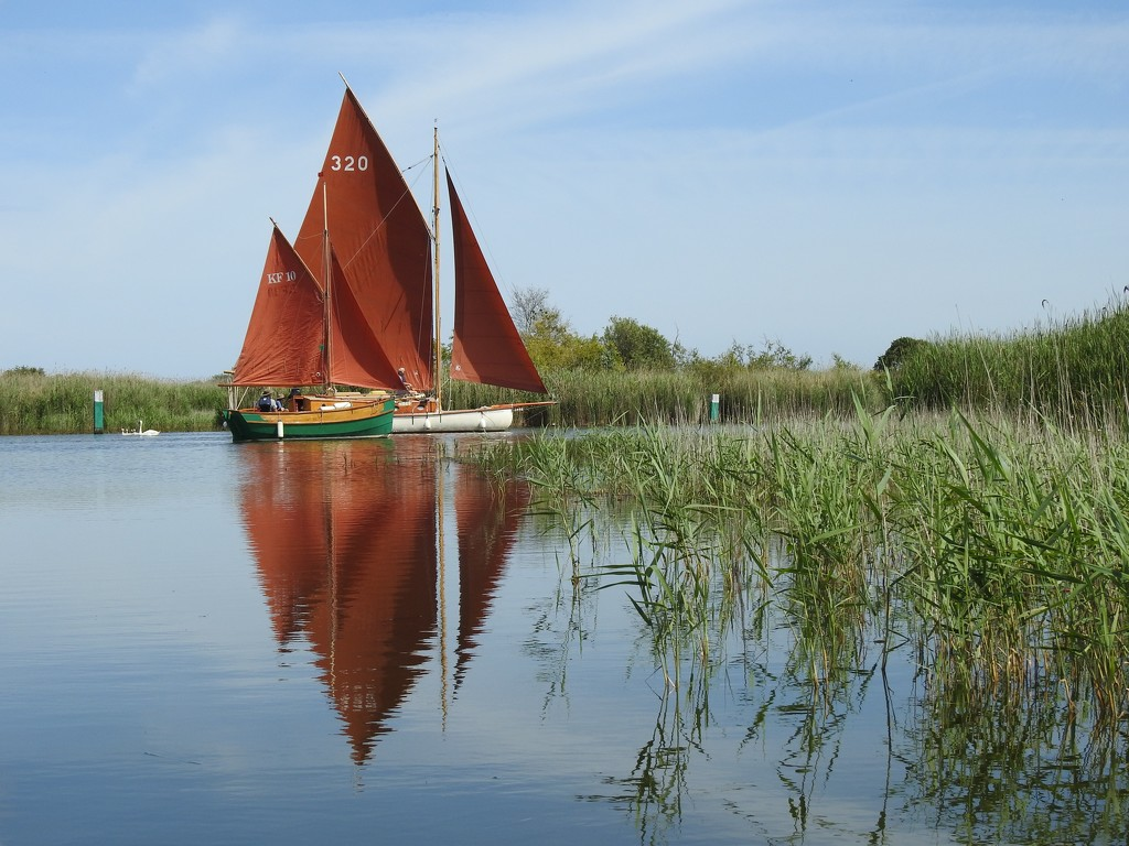 Boats on the Norfolk Broads by susiemc