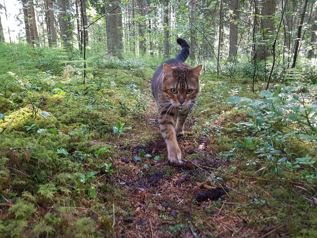 Walk in the woods  by katriak