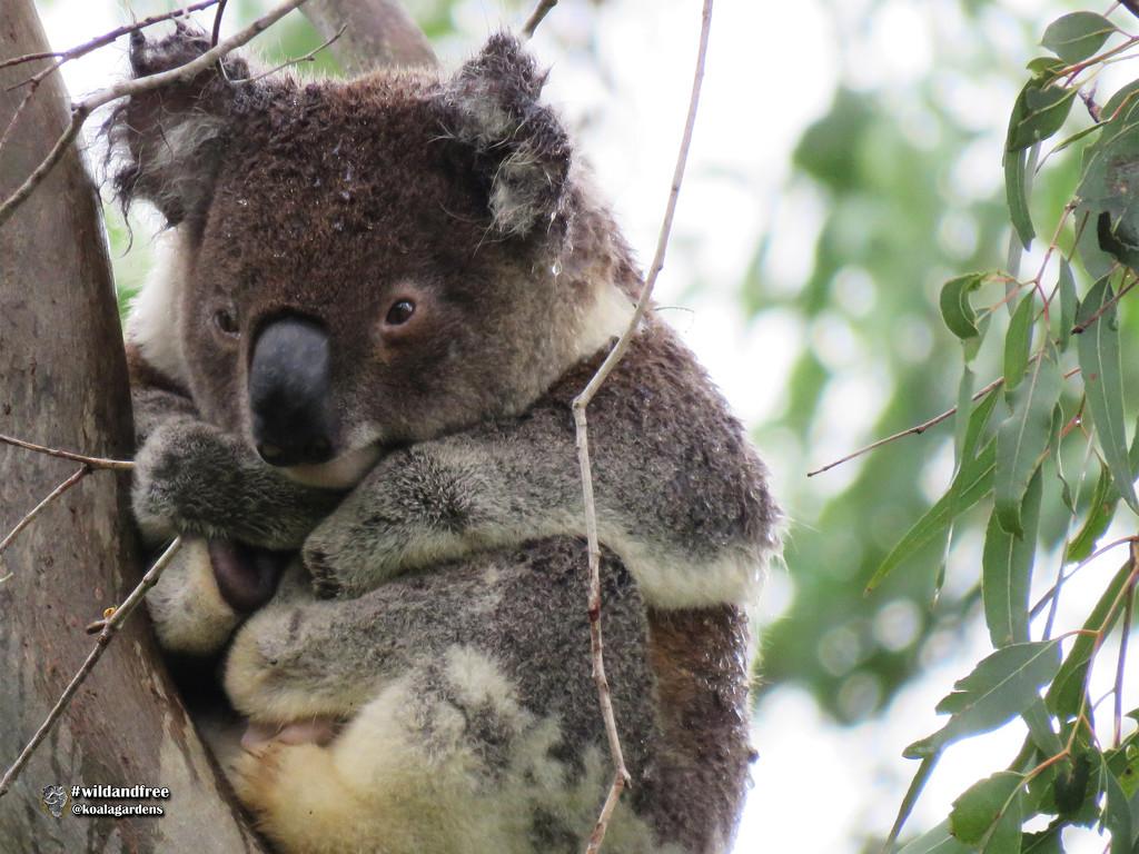 wet wet wet by koalagardens
