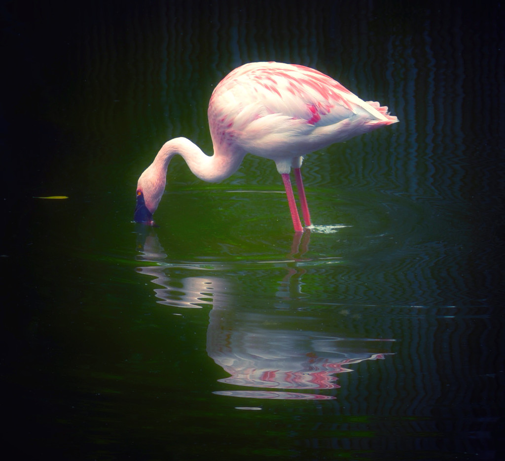 Happy Flamingo Friday by joysfocus
