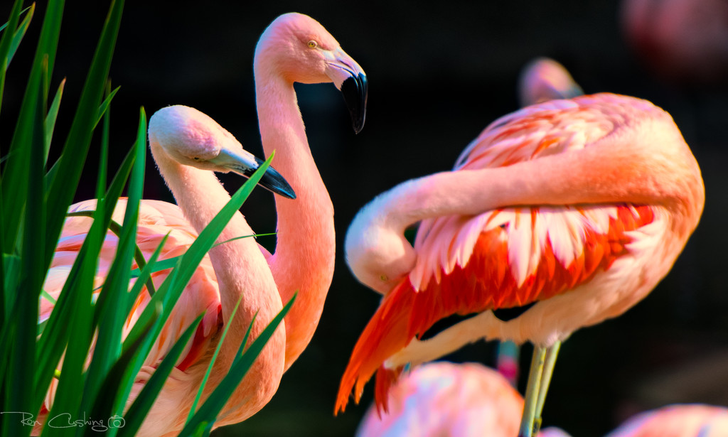 Flamingo Friday '19 14 by stray_shooter