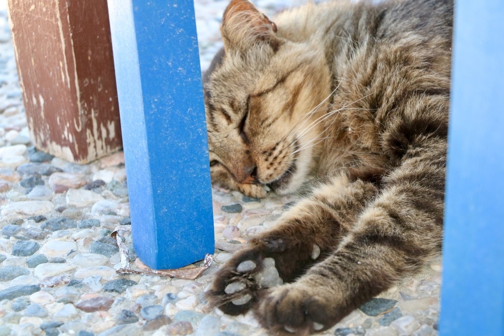 The cats of Kos  by momamo