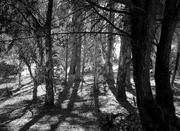 4th Jul 2019 - Forest shadows