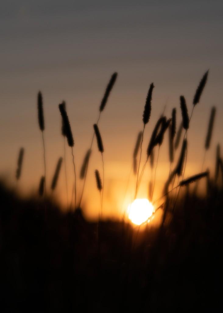 Grasses by shepherdmanswife