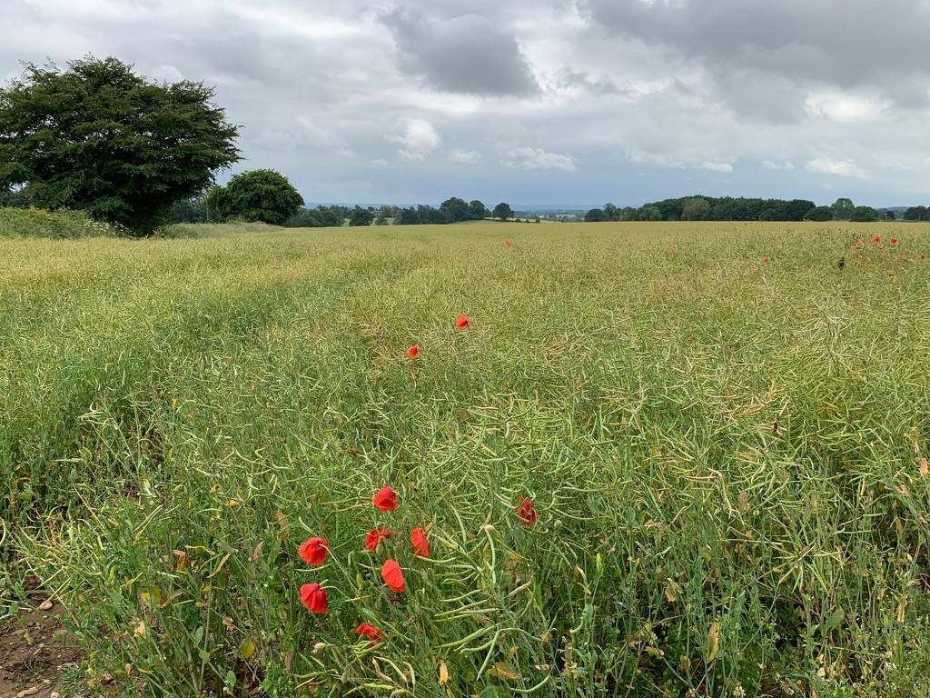 Local field by 365projectmaxine