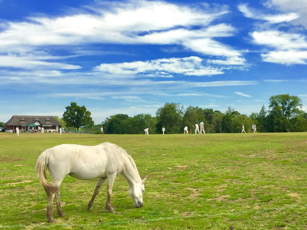 New Forest - cricket and ponies  by lilaclisa