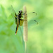 Side view of a dragonfly! by fayefaye