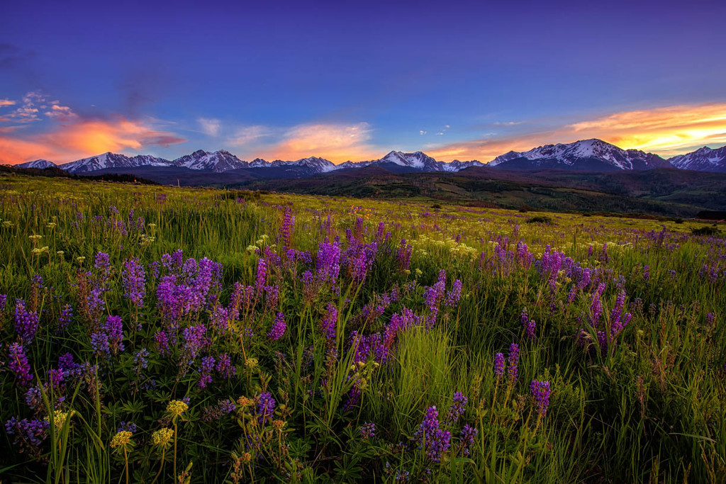 Peace Among the Lupines by exposure4u