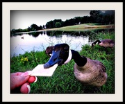 2nd Jul 2019 - Goose On Cracker