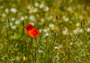 6th Jul 2019 - Wildflowers