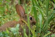 5th Jul 2019 - Bunny
