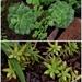 My Succulents ~
