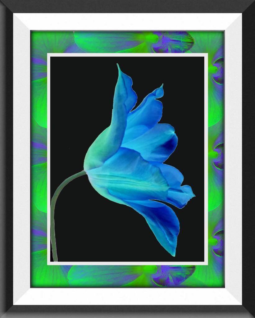 Framed Tulip by shutterbug49