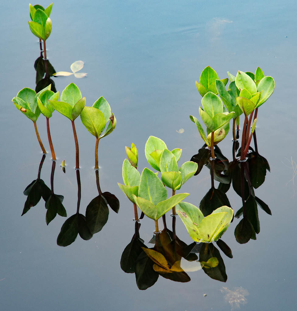 Water-lily by lifeat60degrees