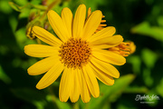 8th Jul 2019 - Yellow flower