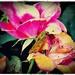 Torn Between Two Flowers