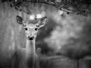 8th Jul 2019 - oh deer...