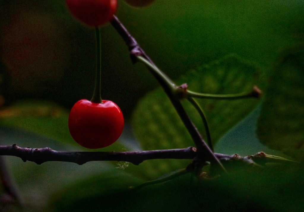 Low key cherry by amyk