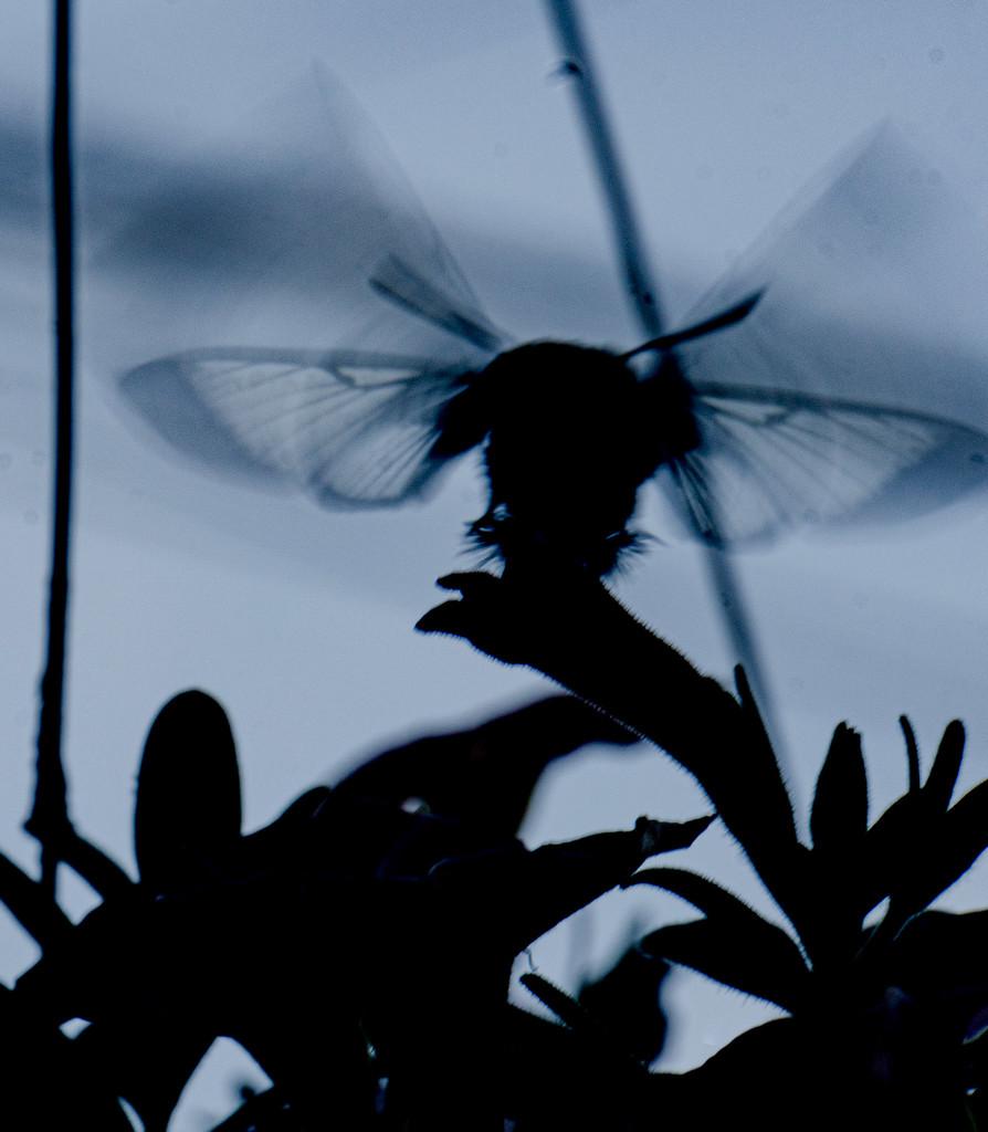 Fluttering wings by randystreat