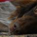 Moka's nap