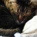 Toulouse's nap