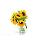 9th Jul 2019 - sunflower
