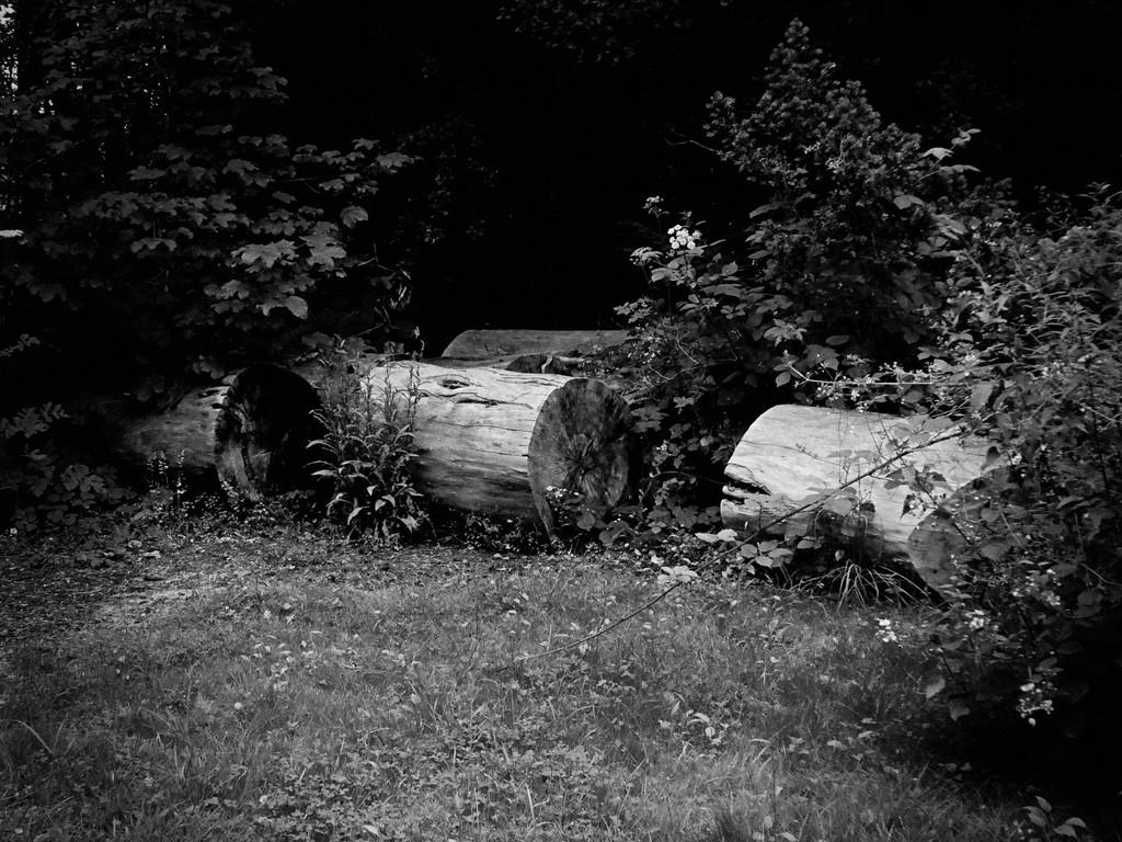 Logs by allsop