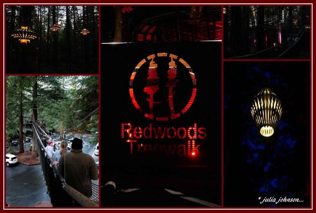 Red WoodEvening Tree Walk... by julzmaioro