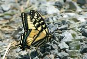 21st Jun 2019 - Butterfly