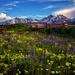 Colorado Garden