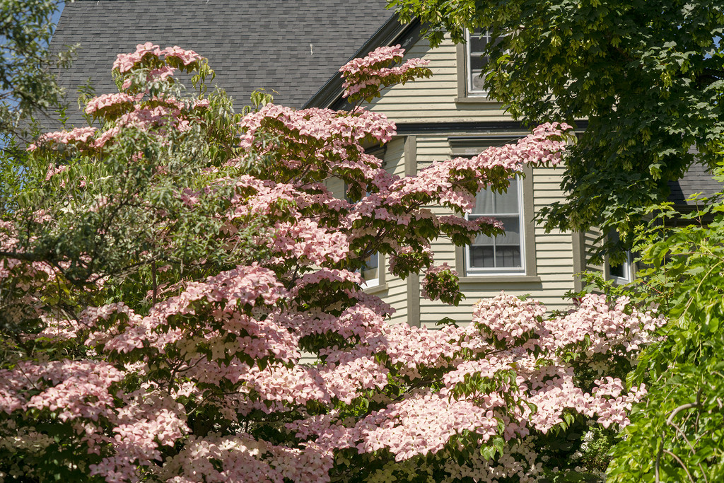 Lavishing Beautiful Blossoms! by Weezilou