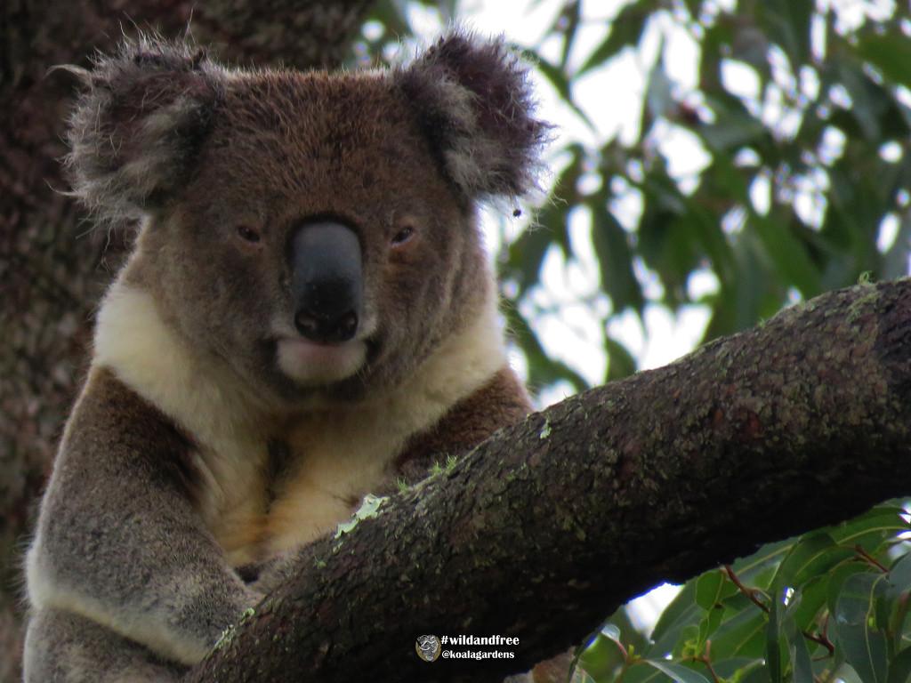 portrait by koalagardens