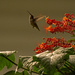 Finally Got One of the Hummingbirds! by rickster549