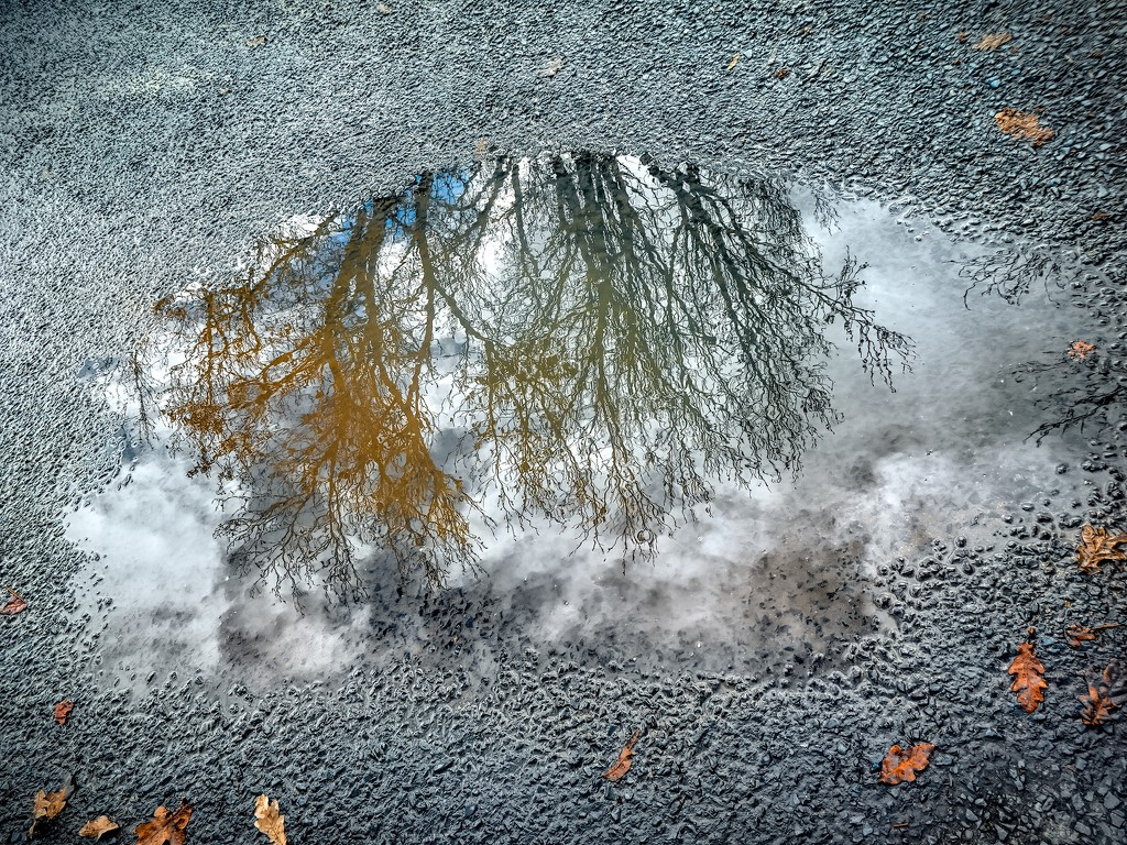 Reflections in a puddle by ludwigsdiana