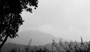 3rd Jul 2019 - Misty in the rain