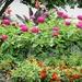 July 10: Summer Flower Bed
