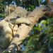 soft as a ... by koalagardens