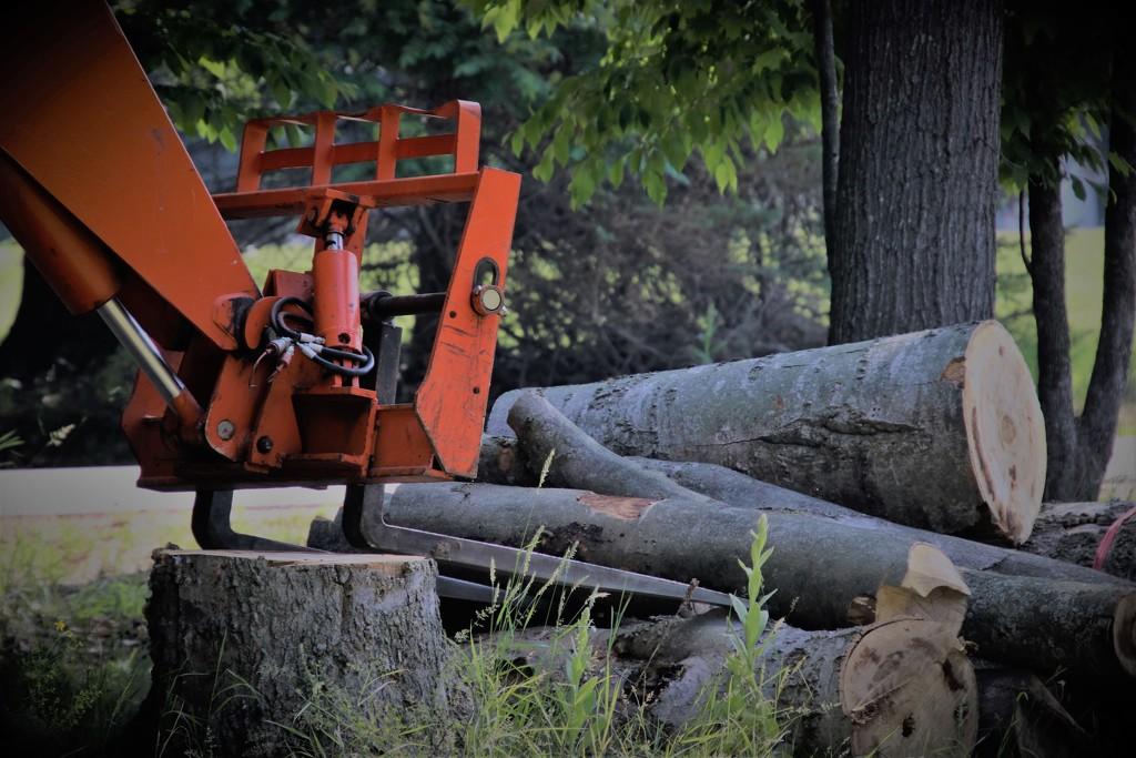 goodbye logs by edorreandresen