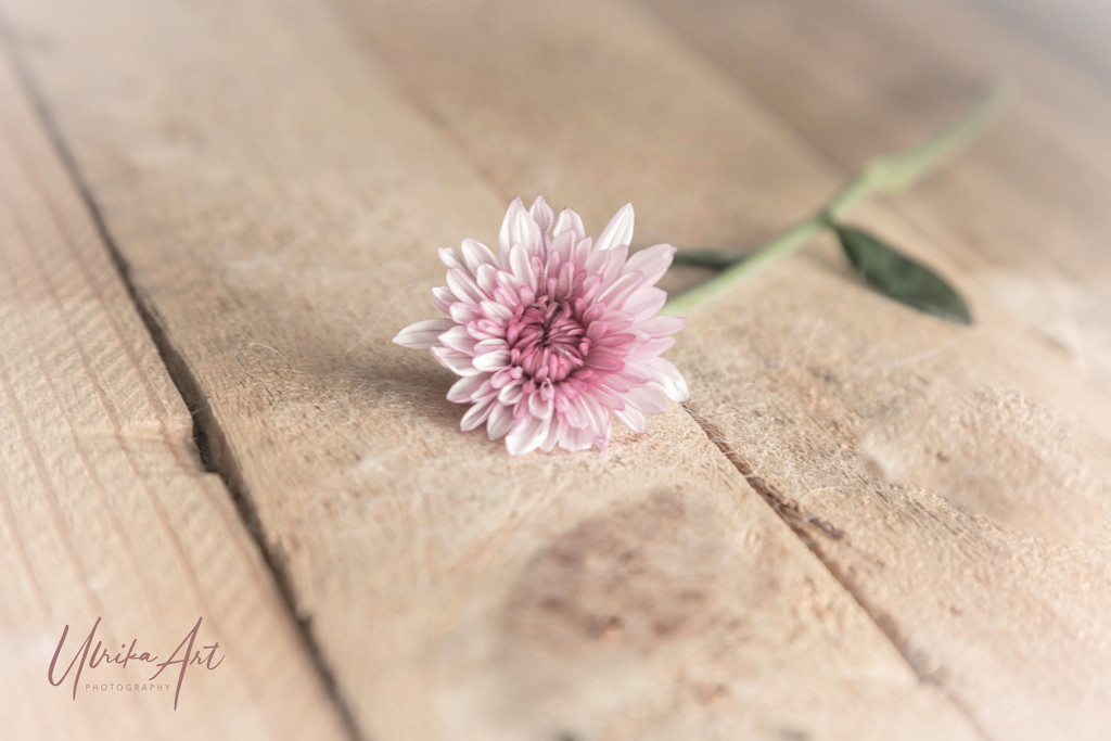 rustic flower by ulla