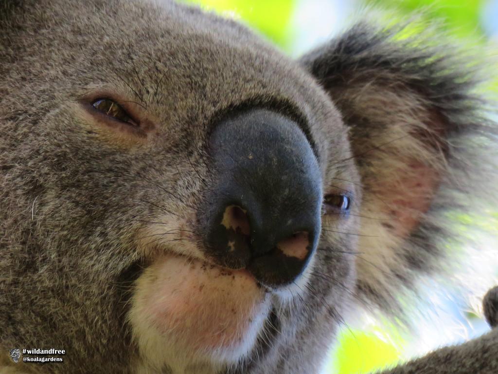 Newman by koalagardens