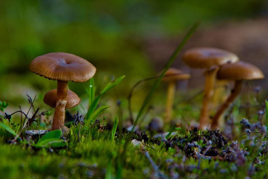 Tiny Toadies DSC_4200  by merrelyn