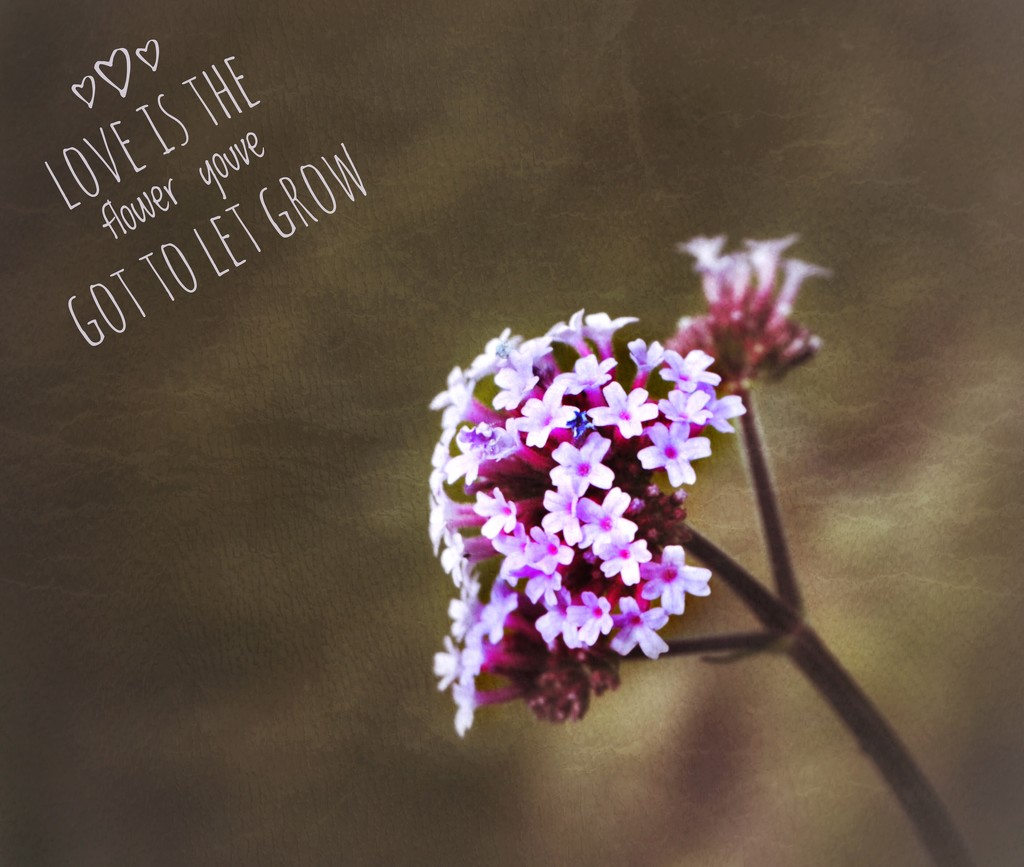 Love is the flower you have to let grow by suesmith