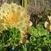 Namib Succulent