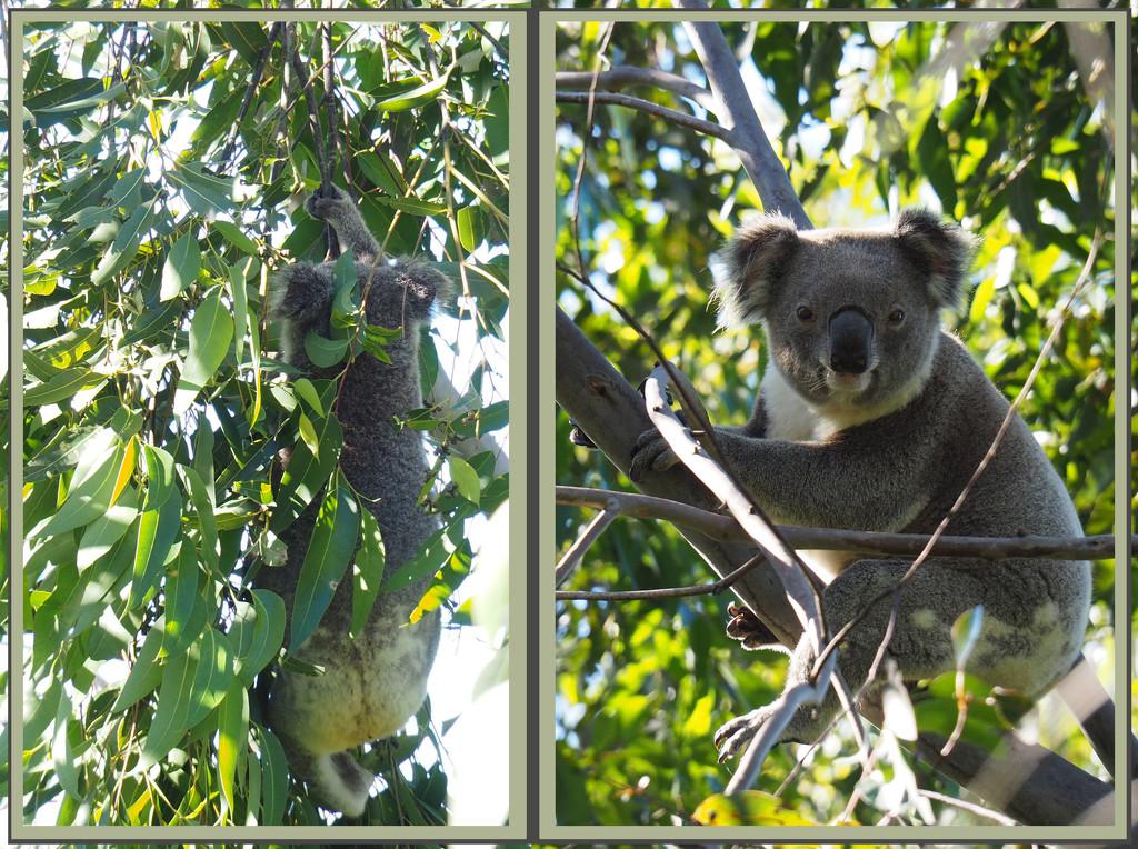 hold on tight! by koalagardens