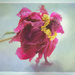 painterly peony by jernst1779