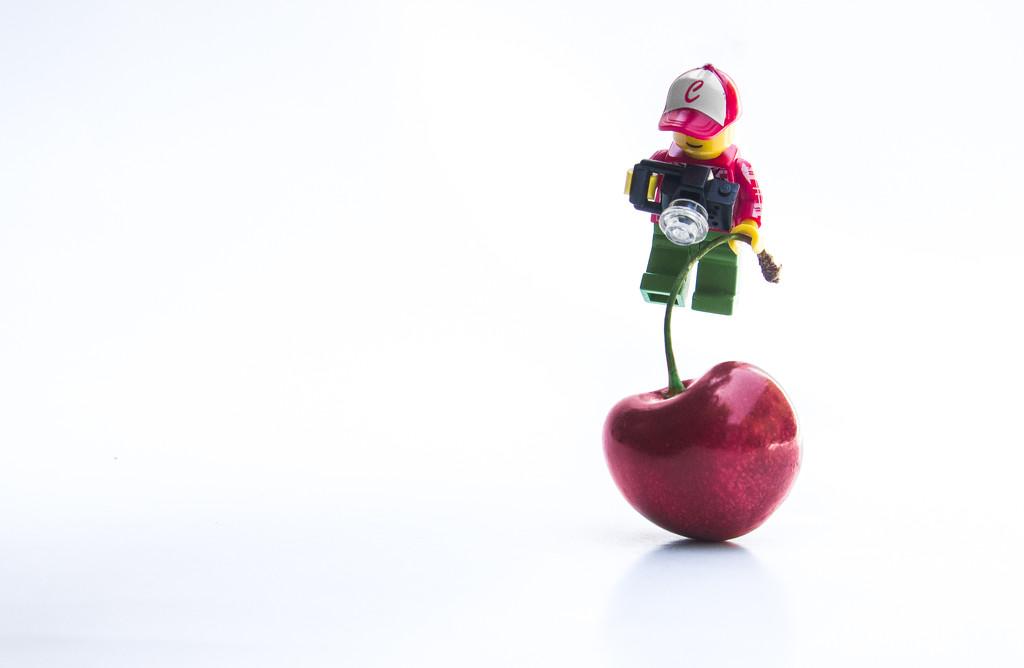 (Day 144) - Cherry Swing by cjphoto